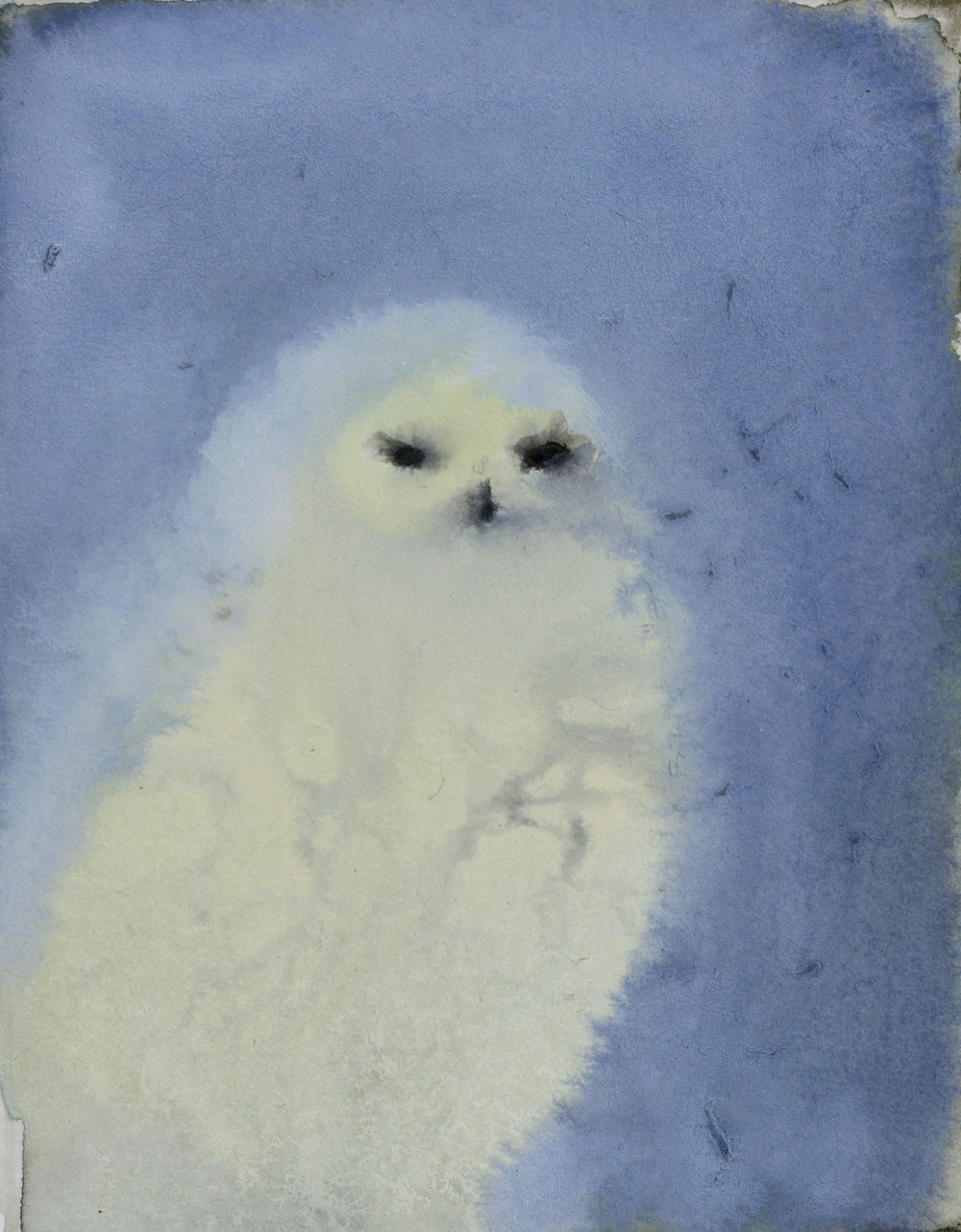 Rebecca_Kinkead_Snowy Owl (on Blue)_4x3 inset on 11 x 7.5.jpg
