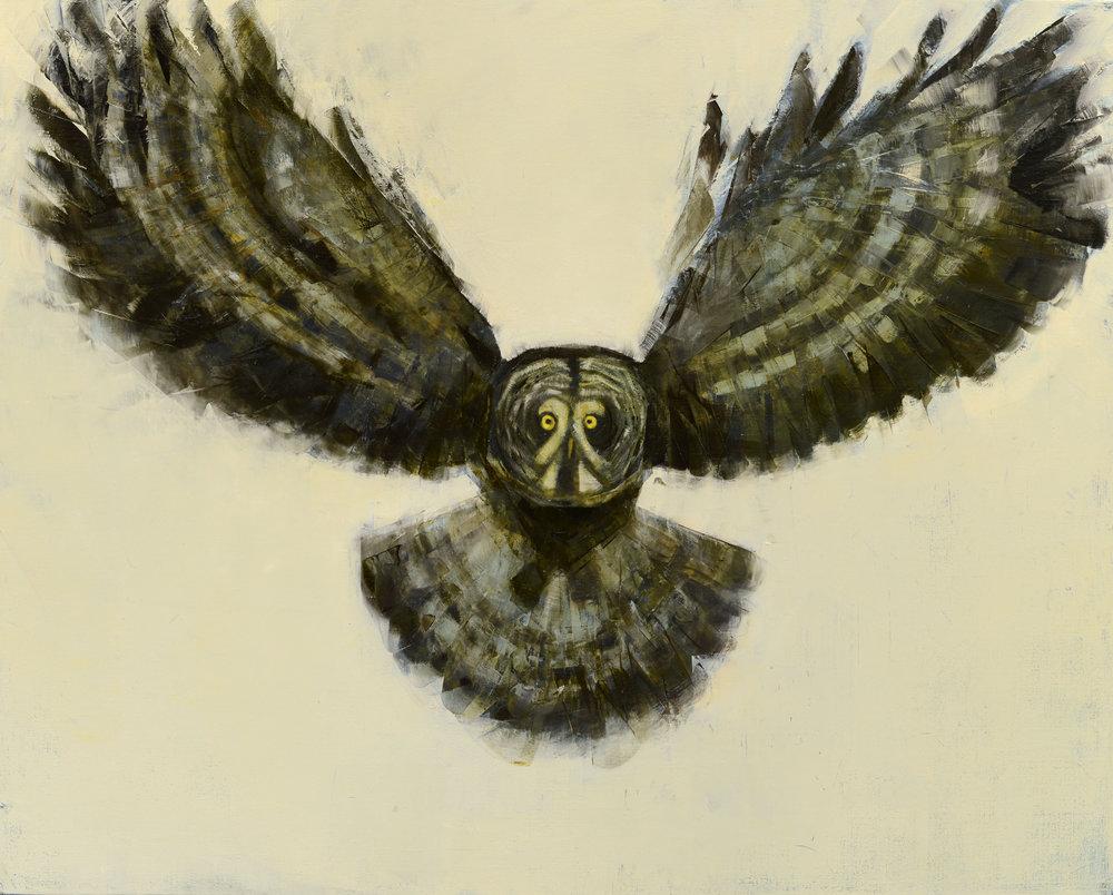 Great Grey Owl in Flight_48x60.jpg