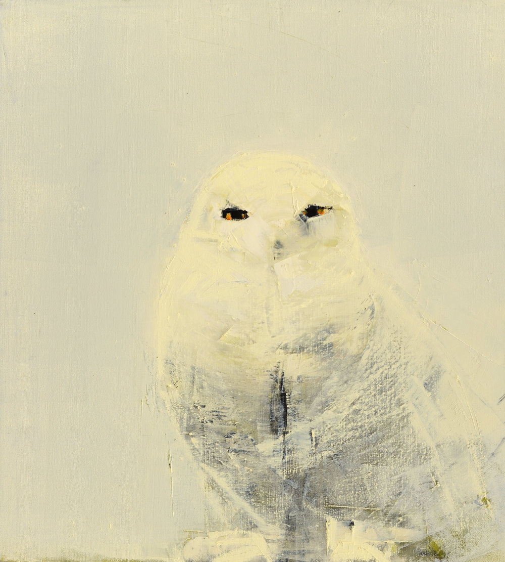 SNOWY OWL (WHITE ON WHITE)   -PRIVATE COLLECTION-  33x 30 inches  oil and wax on linen