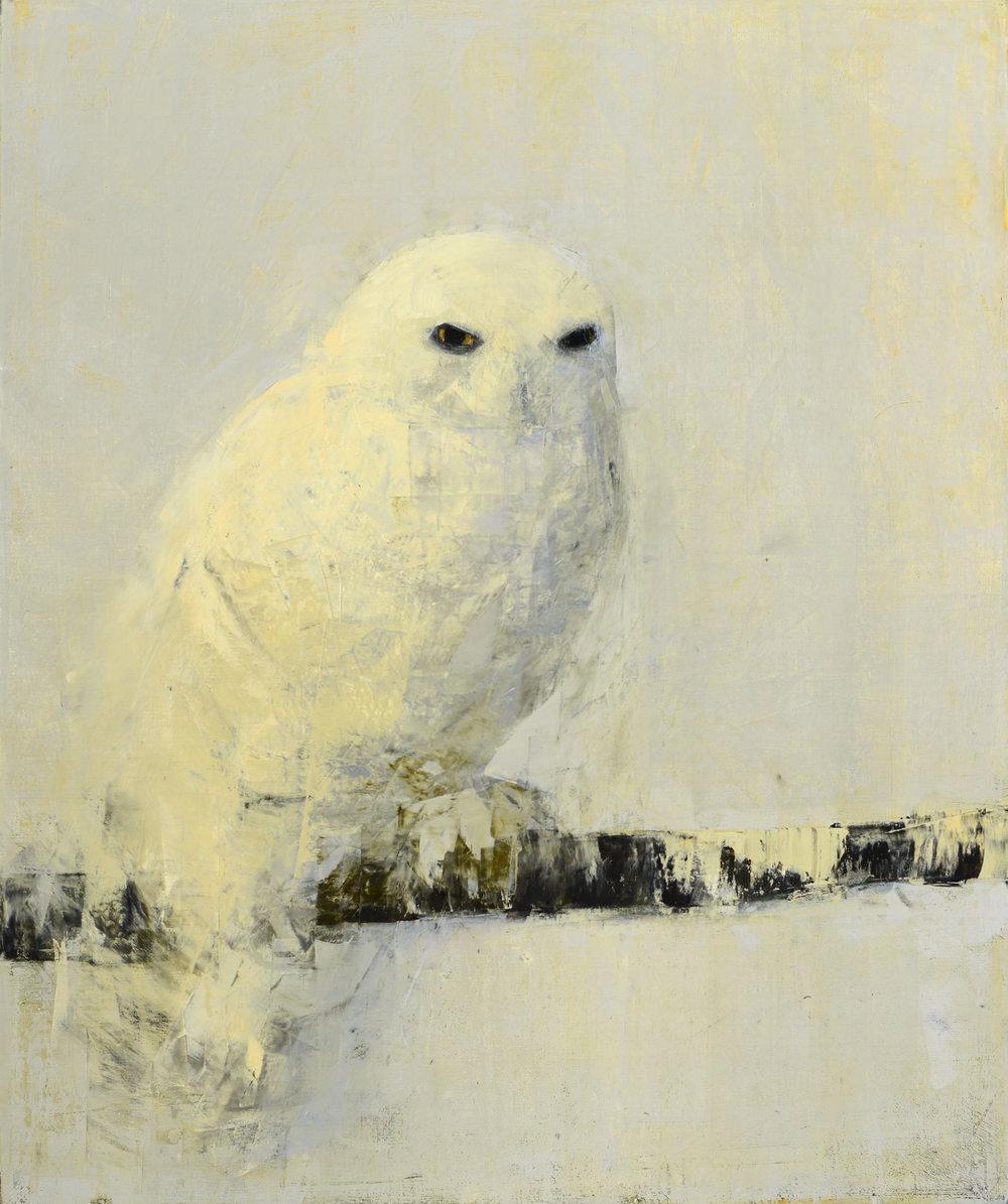 Snowy Owl (Birch Perch)_36x30.jpg