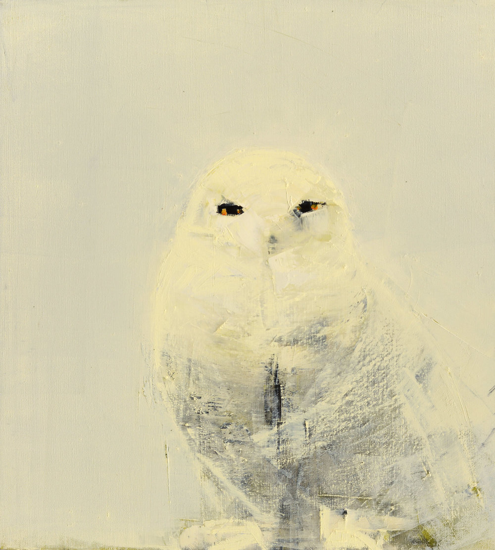 Snowy+Owl+(White+on+White).rkinkead.jpg