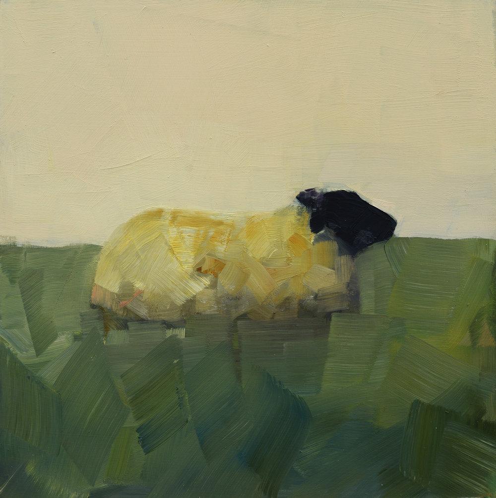 BLACK SHEEP IN REPOSE_10X10.jpg