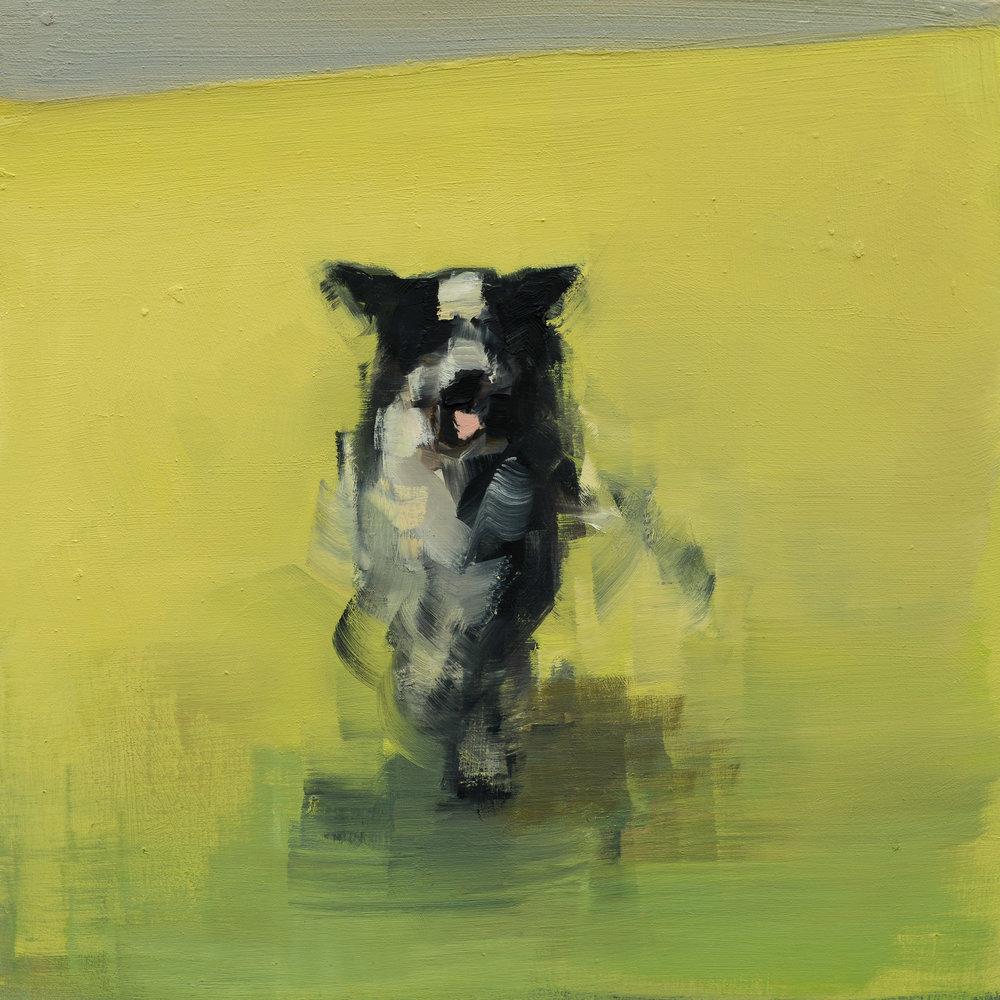 Collie (Running)_10x10.jpg