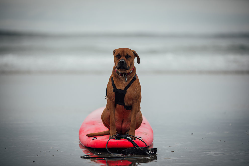 surf DOG.jpg