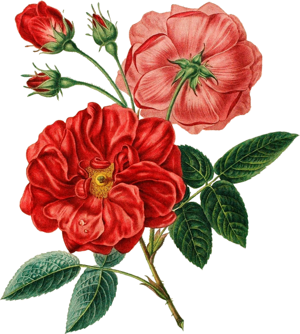 floral-illustration