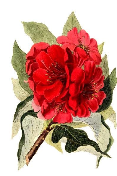 florals-in-rain