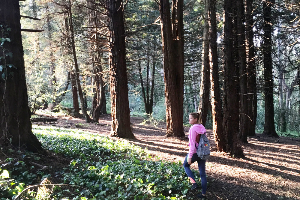 presidio-woods-earth-day-hike-sf-things-to-do