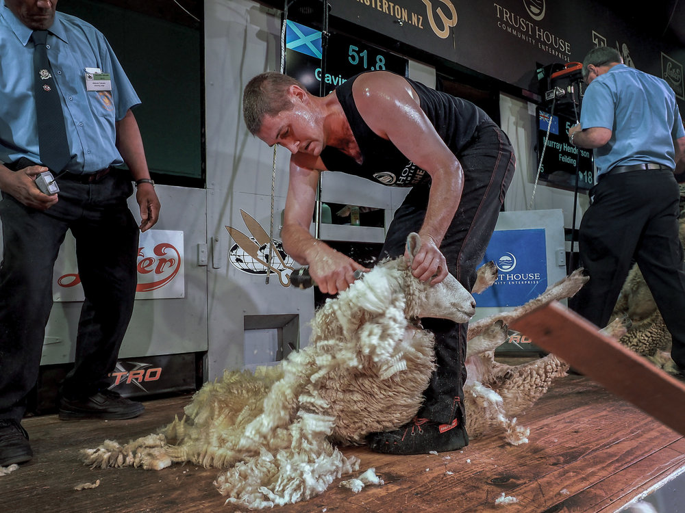 Gavin Mutch Open Shearing winner