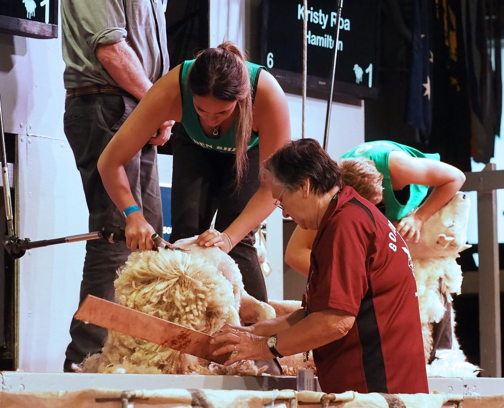 Cheyenne Walker, of Masterton, achieves an ambition to shear at the Golden Shears, with nan Rewa Walker as her woolhandler. PHOTO/PETE NIKOLAISON Golden Shears Media Group.