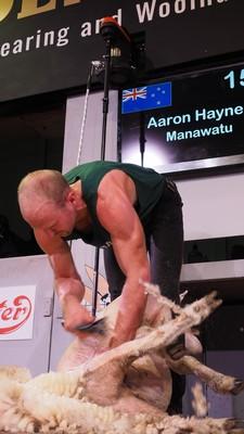 Aaron Haynes YFC winner