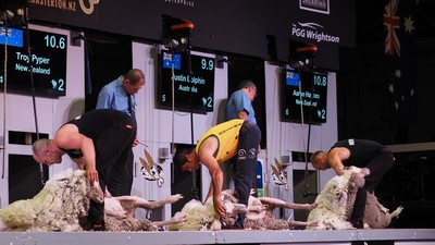 NZ vs AUS shearing final