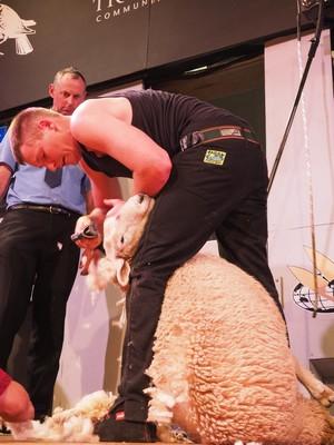 Ethan Pankhurst Masterton winner Senior Shearing.jpg