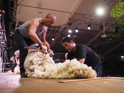 Joel Henare Open Woolhandling final winner 3.jpg