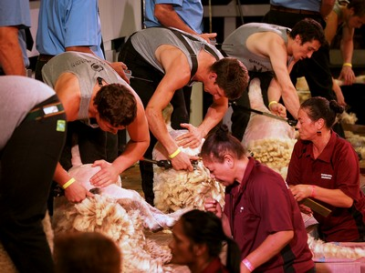 Senior Shearing semi finals 2