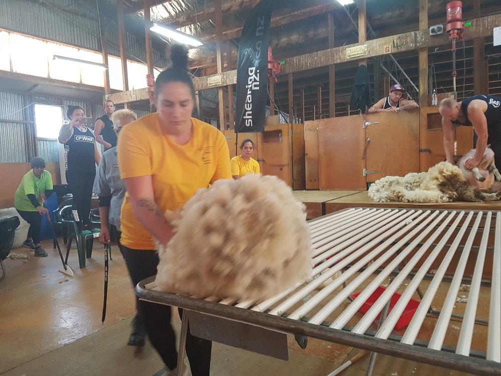 Pagan Karauria - Pre Shears.jpg