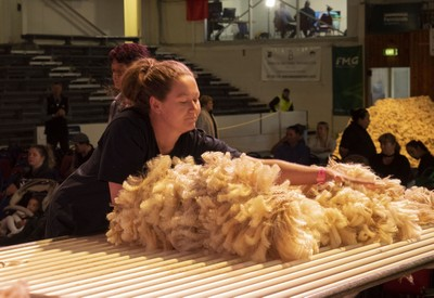 World woolhandling championships selection hopeful Ngaio Hanson, of Eketahuna, in today Golden Shears Open Championship heats. Tomorrow she faces anther challenge in the last stages of a selection series to find two New Zealand woolhandlers for the World championships in France in July.  PHOTO/Pete Nikolaison, Golden Shears