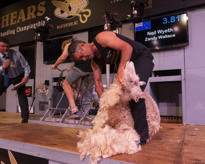 Cycle Challenge Shearing