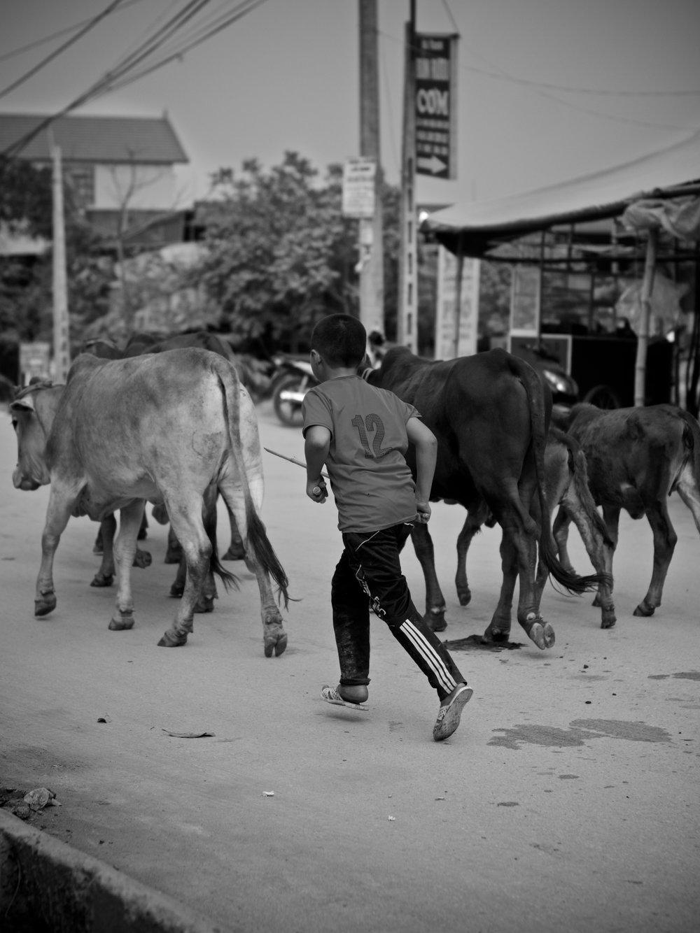 Boy herder