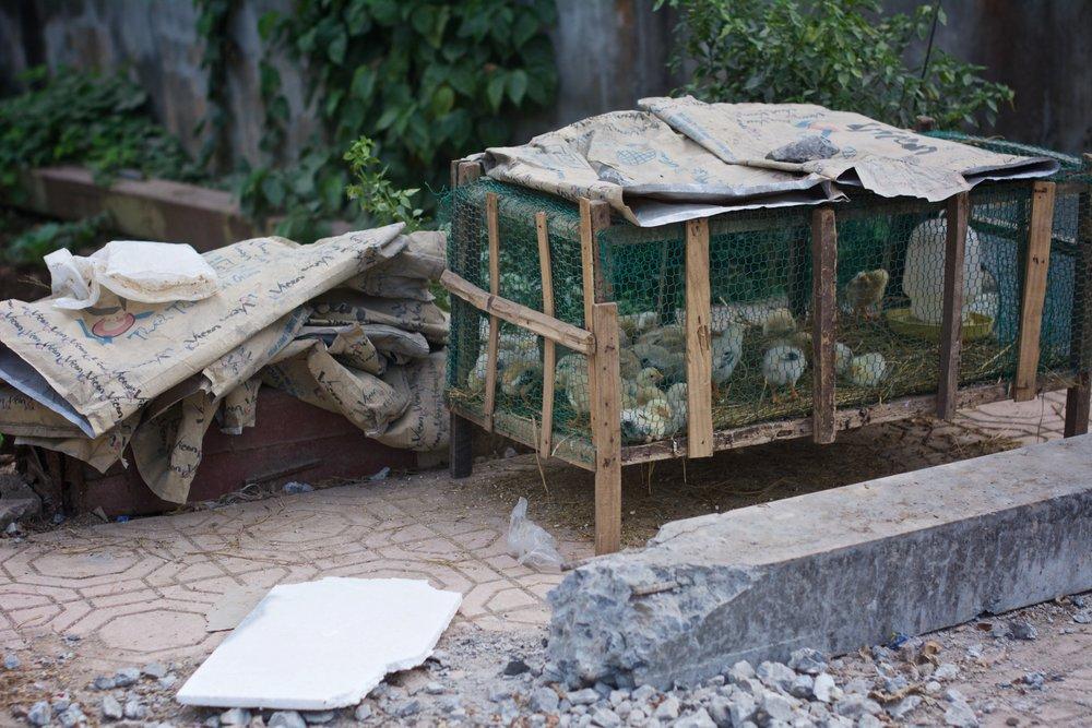 Streetside birdcage