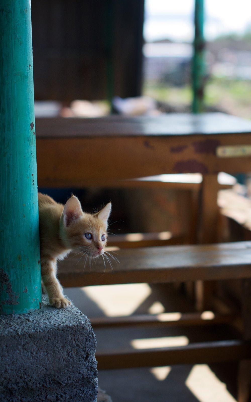 Ferry port kitten