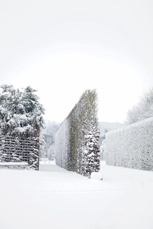Versailles neige hiver (17).jpg