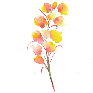 flower icon 2.jpg