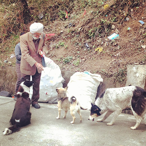 A Sikh man feeding street dogs daily, Dharamsala, India, 2017.
