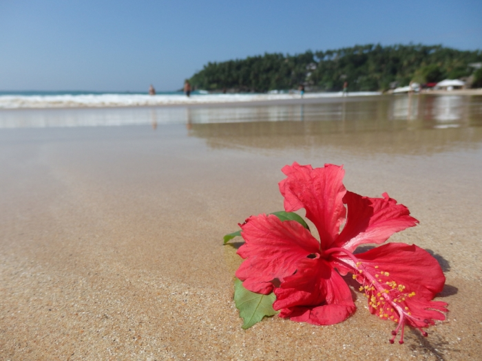Florishing at the shore of Vastness. Sri Lanka, 2016