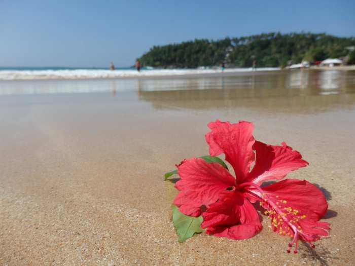 Florecimiento a los pies de la vastedad. Playa de Sri Lanka, 2016