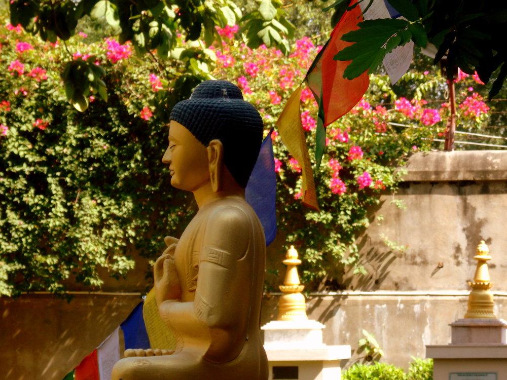 Root Institute for Wisdom and Culture, Bodhgaya, India.