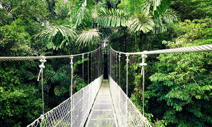 Hanging Bridges.jpg