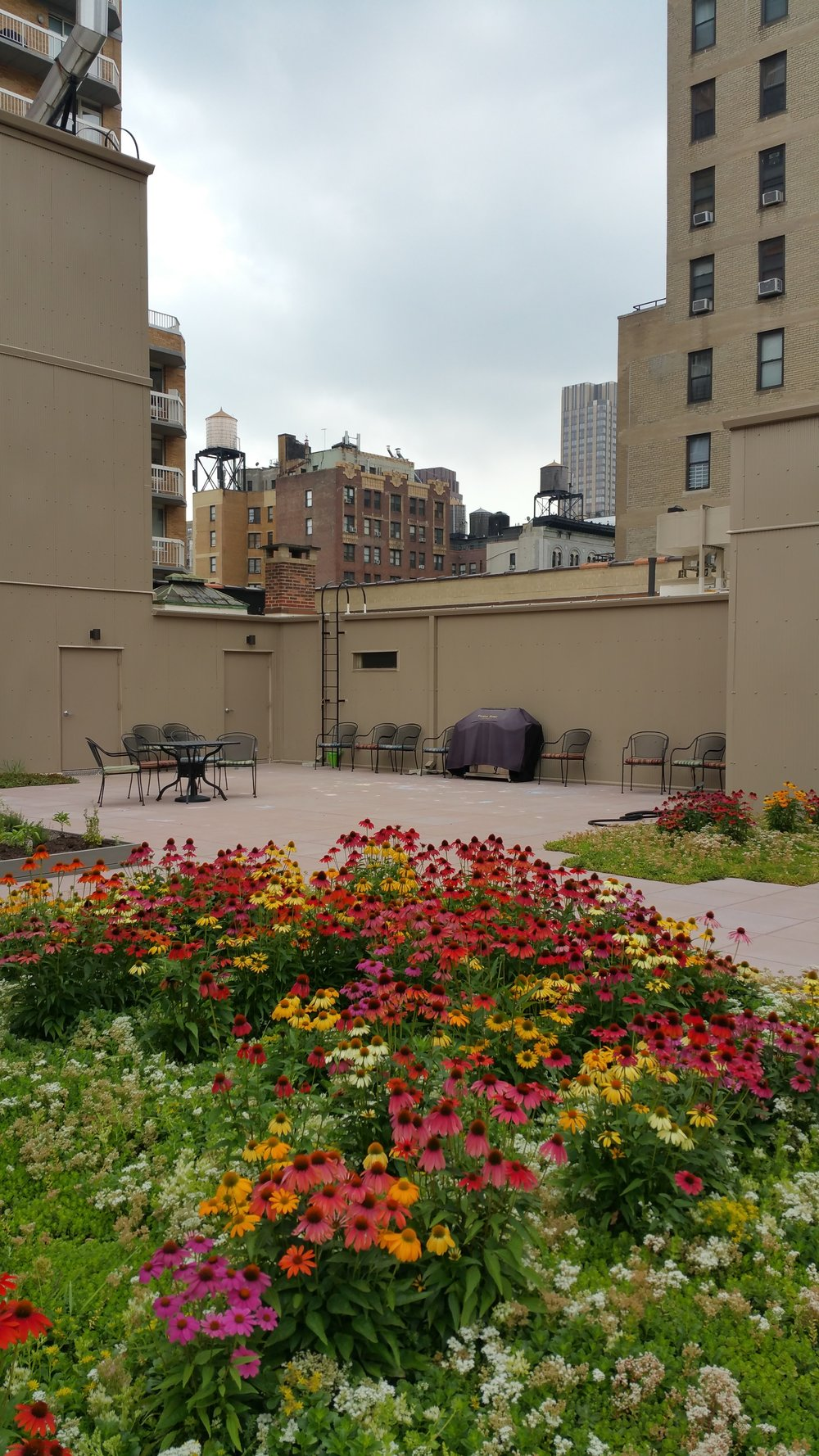 RPC green roof for website.jpg