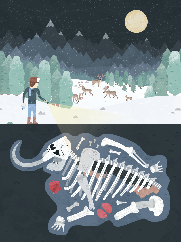 Mammoth bones fossil