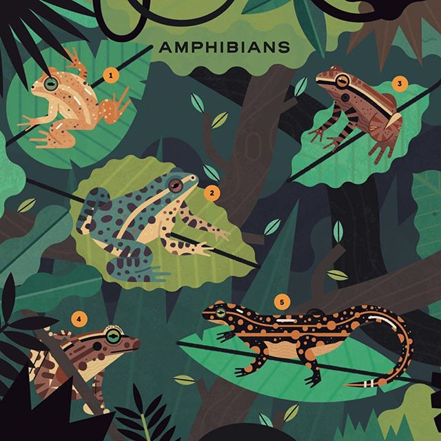 Something exciting I recently finished with @mosquitobooks. Keep your eyes peeled, more to come! 📚🐸 #frog #frogs #extinction #extinct #amphibians #leaves #jungle #nonfiction #kidlit #childrensbook #animals #wildlife #illustration #illustrator #texture #digitalart #design #creative #bookstagram #book #photoshop  #green