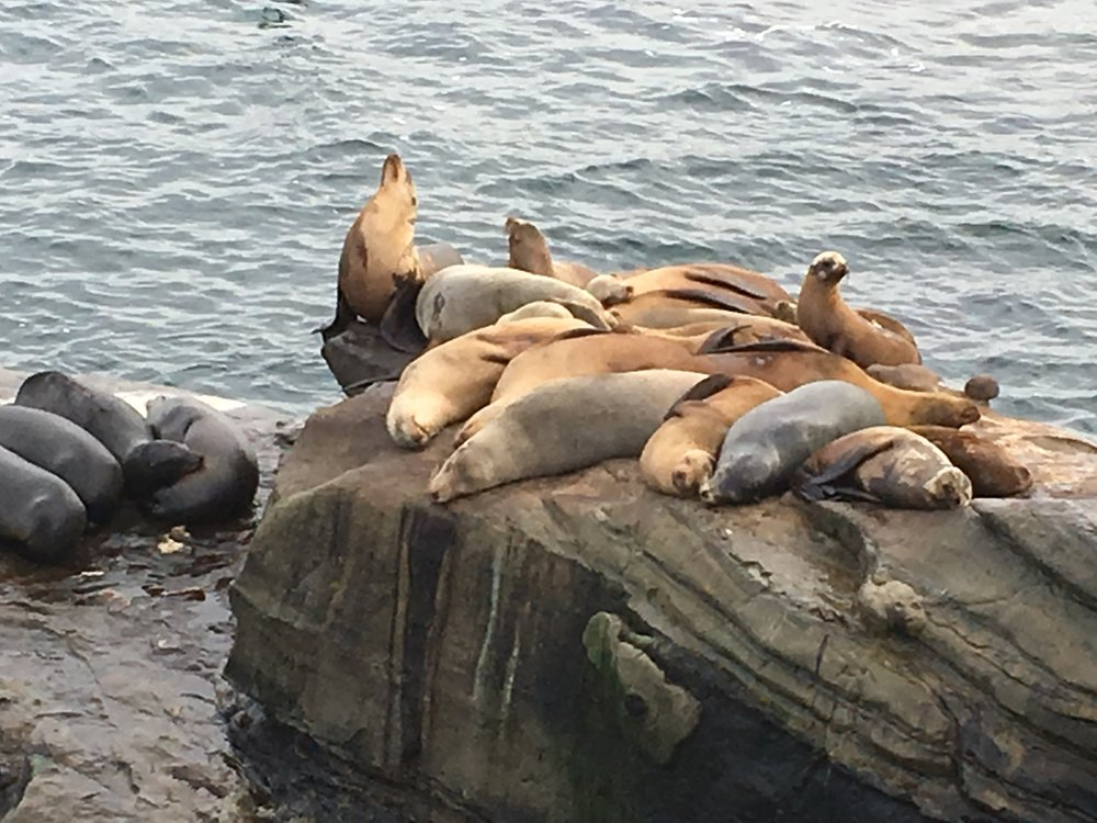 It's easy to spend time watching the seals.