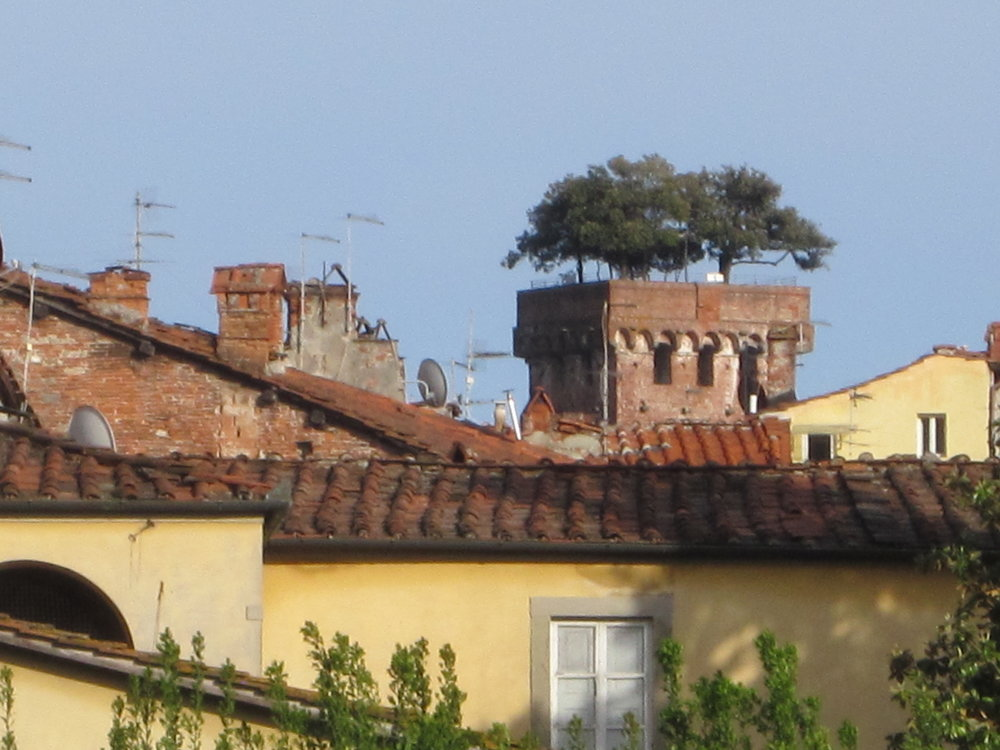 Lucca's famous tower - the Torre Guinigi - and the characteristic rooftops of Lucca.