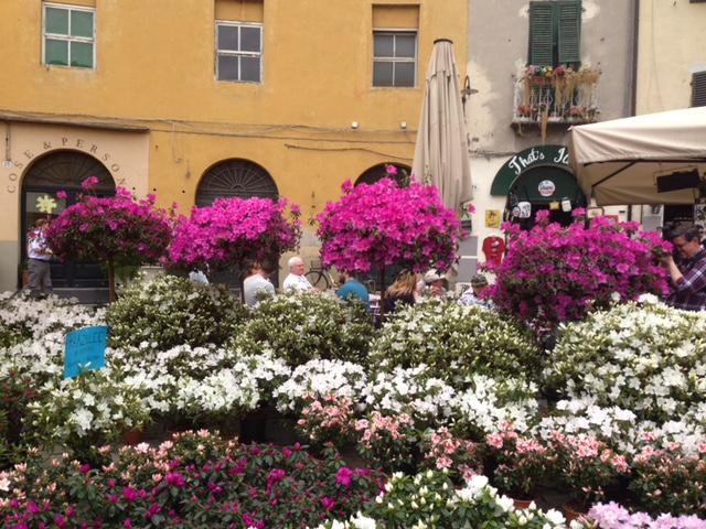 Santa Zita Flower Market, Lucca, spring 2013
