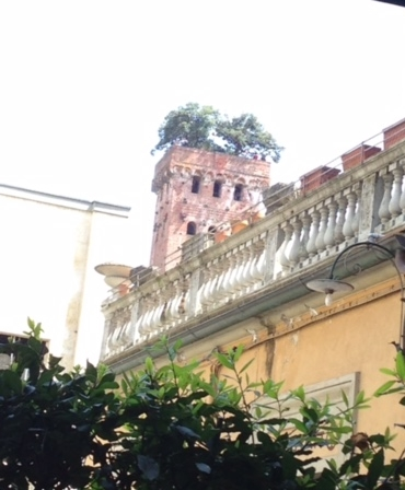 The Torre Guinigi, topped with trees, as seen from the patio of Gigi Trattoria,