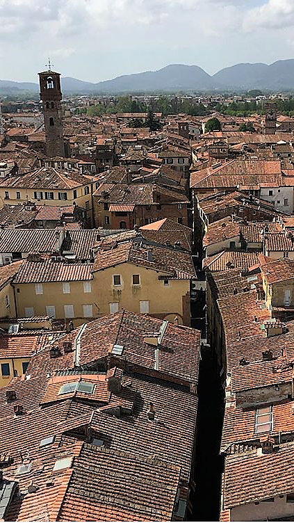 A view over Lucca from Torre Guinigi