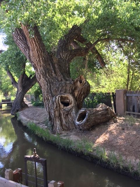 tree stumps.JPG