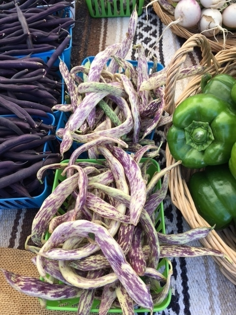 variegated purple beans