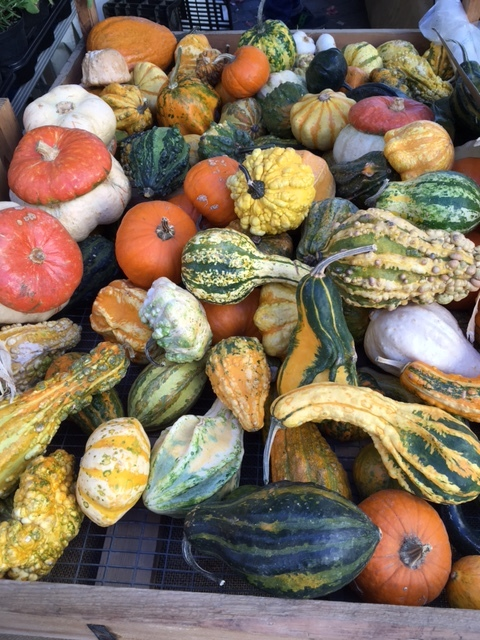fall gourds.JPG