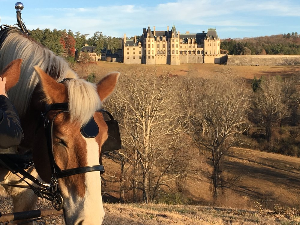 The Biltmore house, as seen from a horse-drawn carriage on the estate grounds.