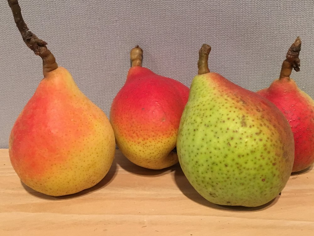 This looks like a still-life painting, but is actually a display of pears at the Murabilia garden show.