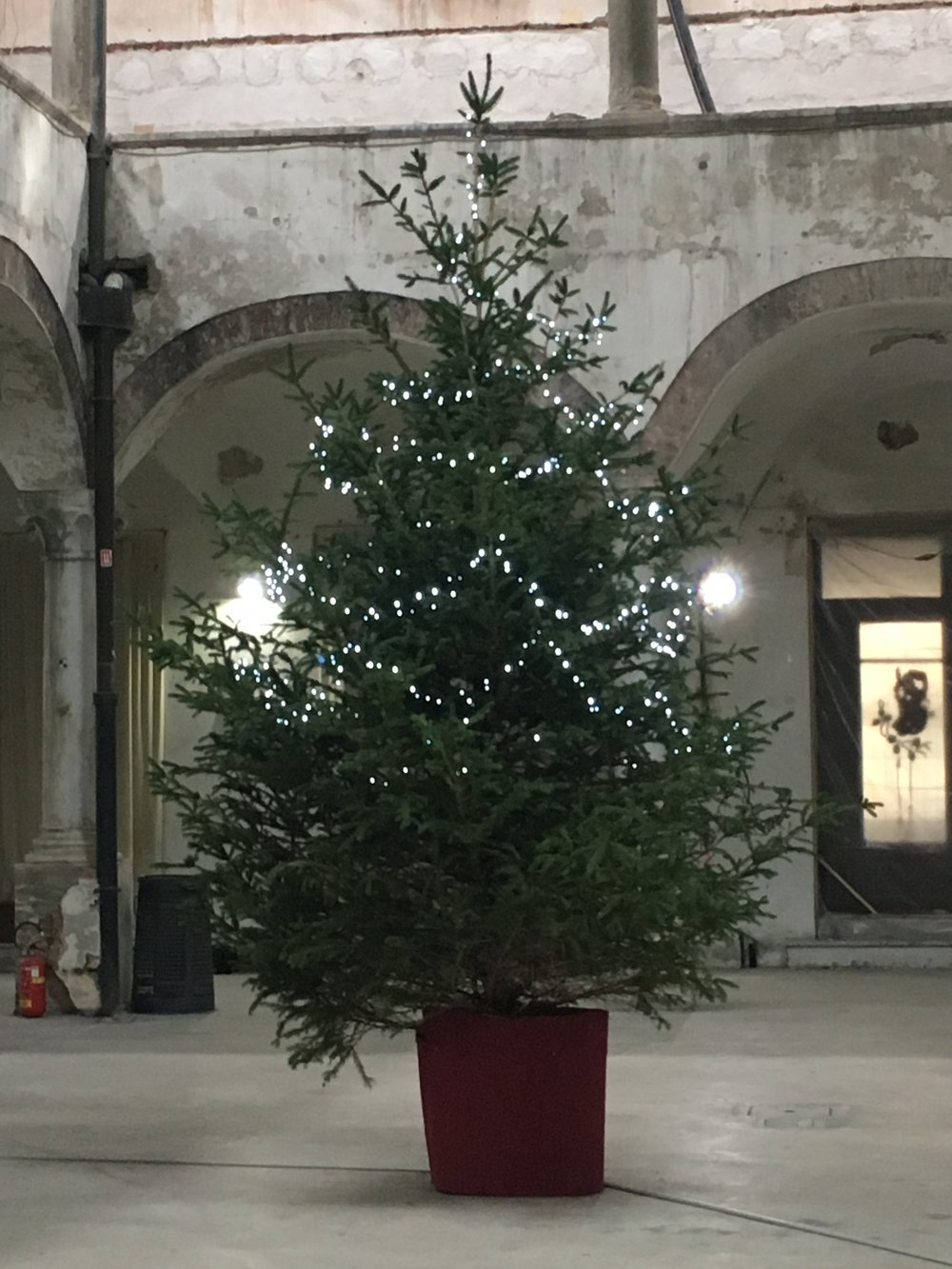 This simple tree sits inside the old mercato alongside a small art show.