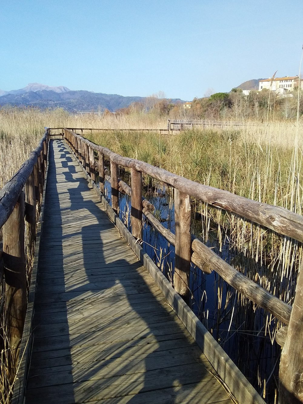 The boardwalk path through the marshes