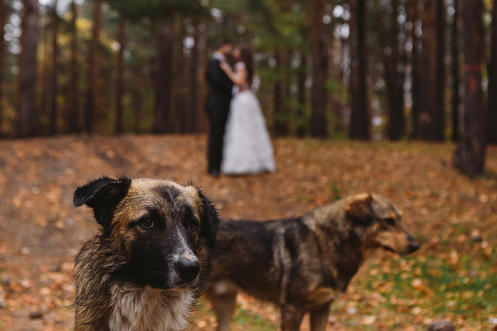 fotograf-nunta-grafix-studio-3