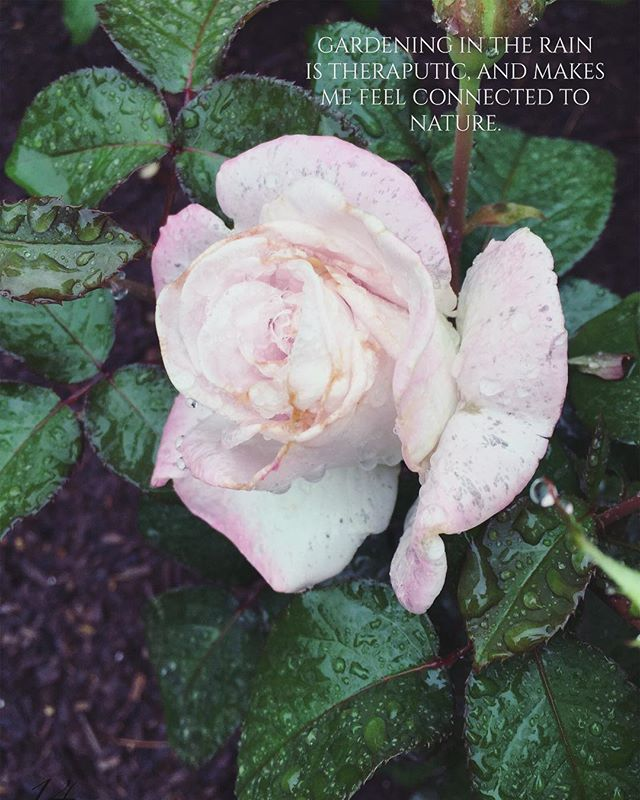 The beauty of rainy summer days 💖 A page straight from The Gardens At Riverstone 💐 . . . . #shabby #shabbychic #shabbychicdecor #gardening #frenchfashion #gardenbook #selfpublished #roses #bloggerstyle #pastel #garden #greenthumb #nature #inspiration #cottagestyle #cottagegarden #rustic