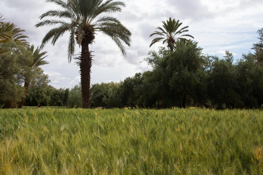 morocco-morocco travel-visit morocco-travel-travel photography-travel photographer-alina mendoza-alina mendoza photography-108.jpg