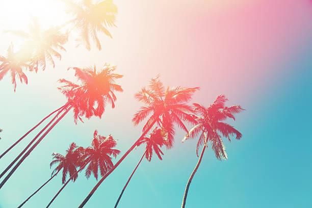 Pink Palmtrees.jpg